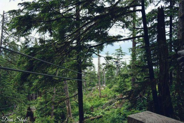 Zip-lining adventures in the rainforest