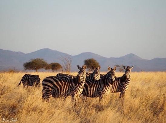 Zebra Squad Goals
