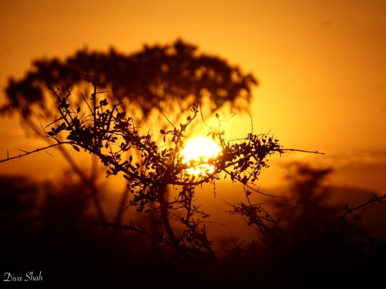 Vibrant sunrises like these can only be seen in the Kenyan wild