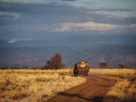 Driving through golden, sunlit Meru National Park